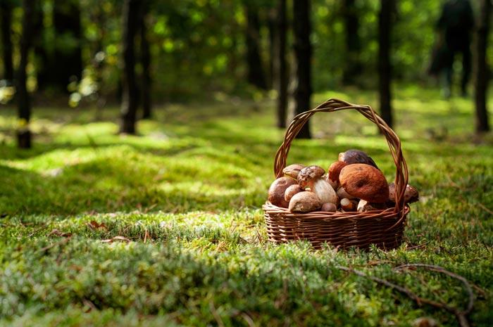 Грибы в корзине на поляне